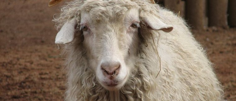Animal Genetic Resources