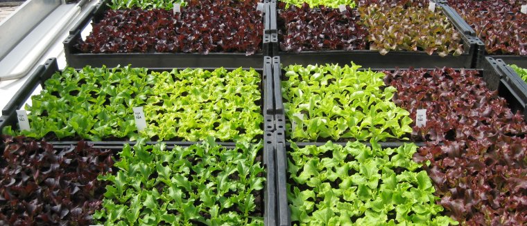 Plant Genetic Resources